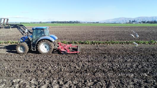 Rata panerazer in ex crop ground