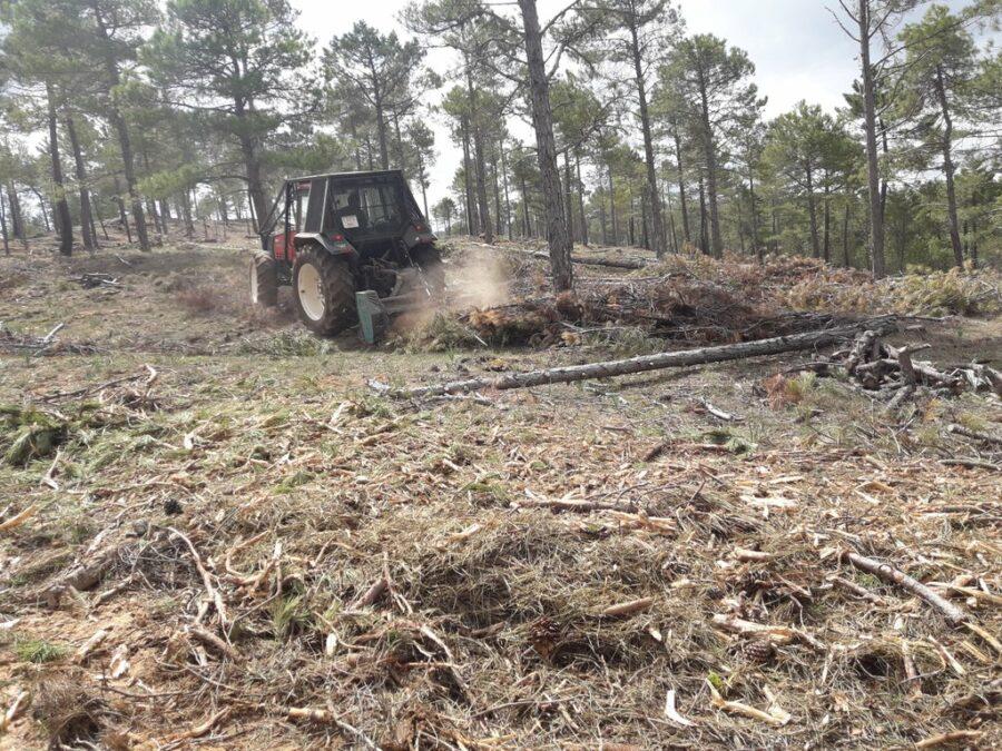 Mulching forestry slash with Picursa boxing PTO drive mulcher